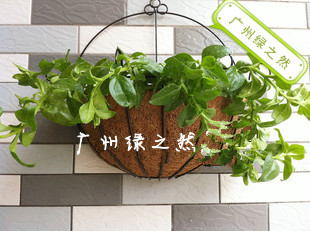 freeshipping Balcony 25cm wall-mounted coconut for palm pot diaopen semicircle coconut palm hanging pots brown leather(China (Mainland))