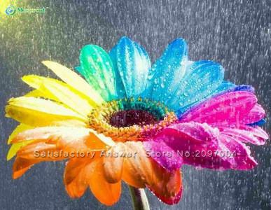 Vente chaude 100 pcs sac color gerbera maison jardin for Fleurs livraison gratuite