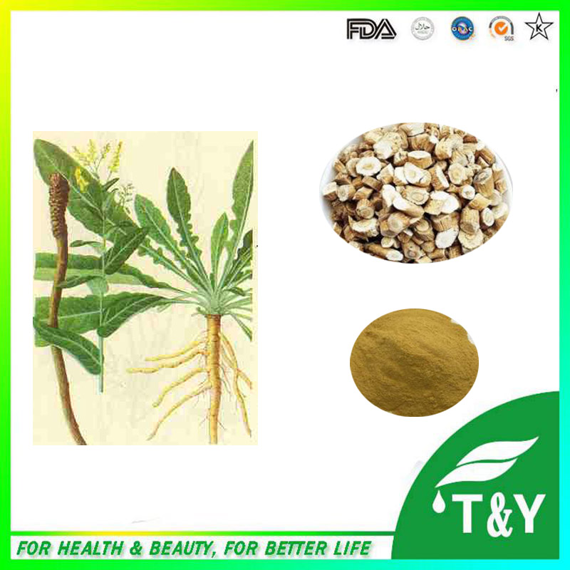 Anti- viral and Anti- bacterial Radix Isatidis Extract / Indigowoad Root Extract/ Manchurian Wildginger Herb 300g/lot<br><br>Aliexpress