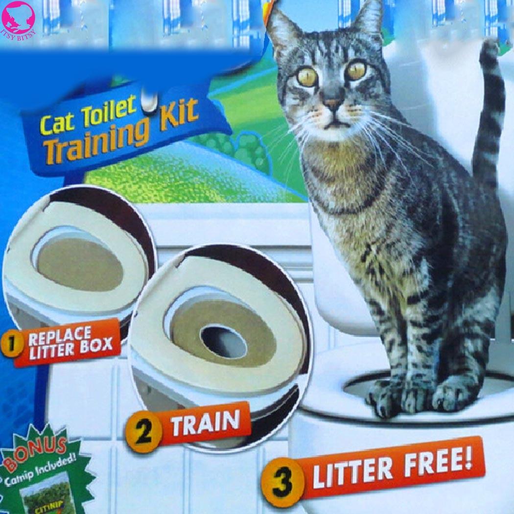 Уход за здоровьем кота из Китая