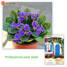 Violet Seeds Indoor Bonsai Plants Matthiola Incana Potted Flower 1 Professional Pack / 5 - Gardens store
