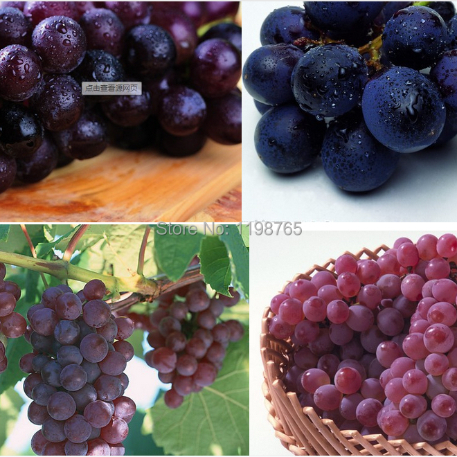 50pcs 8 kinds for Chose High Quality Grape Seeds Delicious Fruit Seed Senior Courtyard Plants Climbing Tree seeds Free Ship(China (Mainland))