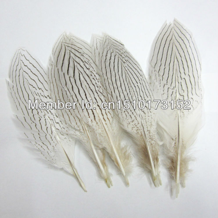 3s Natural White Pheasant Tail Sword feathers 8-10inches/20-25cm Crafts FH1-3 - TiTi Feather Market store