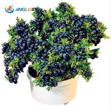 Sale! 100 Pcs/Bag Blueberry Tree Seed Fruit Blueberry Seed Potted Bonsai Tree Seeds