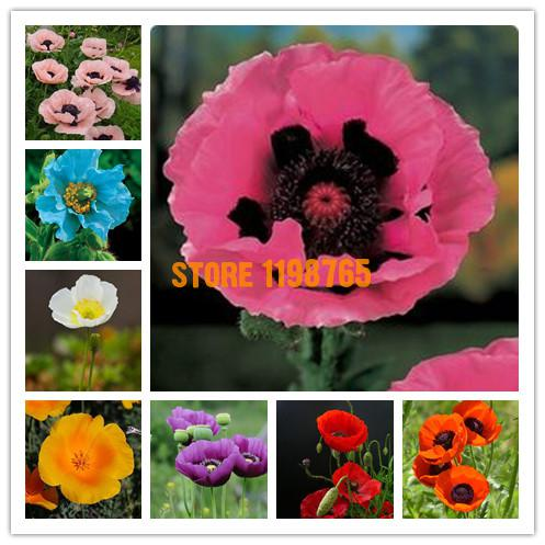 300seeds/pack Oriental Poppy Flowers Seeds, Flower Seeds Potted Flowers Hardy Varieties Of Seed Balcony Flower Pots Planters(China (Mainland))
