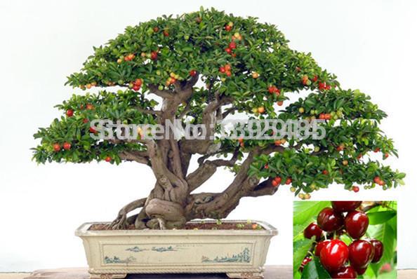 Plantes d 39 int rieur haut de gamme besoin fruits graines for Graine d interieur