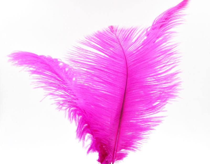 Best selling Ostrich Feather for Wedding Party Home Hairs Decoration 20pcs/lot,20-25cm DSC-0541(China (Mainland))