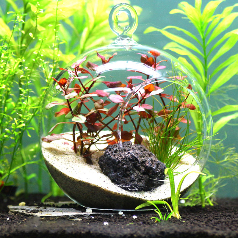 Aquarium water plants micro landscape glass ball for fish for Shrimp fish tank