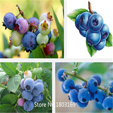 200pcs/lot Top Hat Blueberry Seeds ,fruit seeds Home Container Bonsai rich in Anthocyanin 6 Rare Mix Colors(China (Mainland))