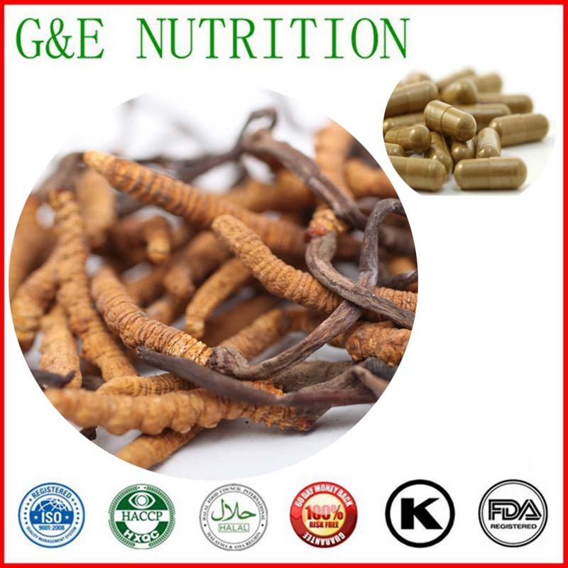 500mg x 900pcs High quality Cordyceps/ Worm grass/ Cordyceps sinensis/ Chinese caterpillar fungus Extract Capsule free shipping<br><br>Aliexpress