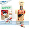 CMAM TORSO03 45cm High Bisexual Human Torso Anatomical Educational Tunk Models