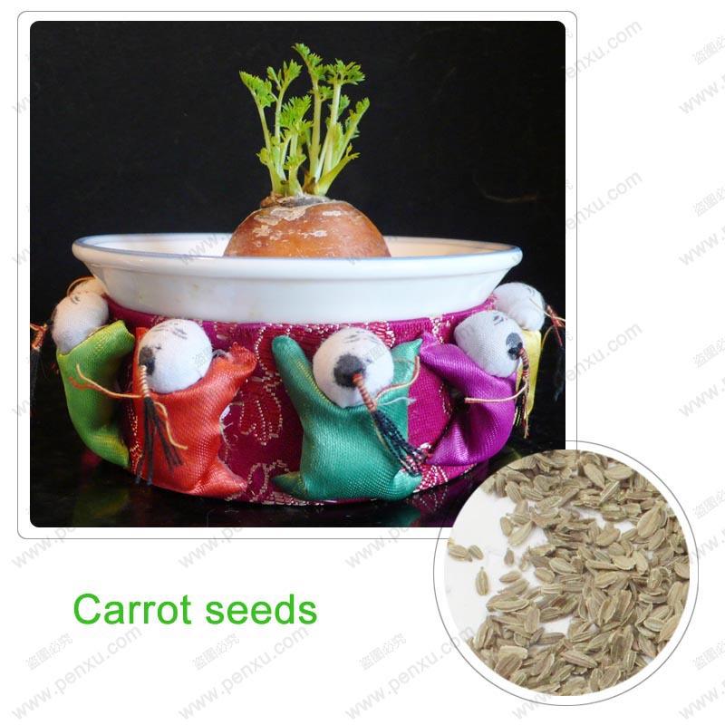 Vegetable fruit seeds Purple Dragon Carrot seeds Anti-aging ginseng nourishing Bonsai plants Seeds for home & garden 200 seeds(China (Mainland))