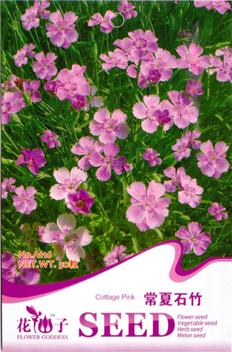 50 Cottage Pink Flower Fairy scented home Seeds Beautify their homes Real Seeds Free Shipping A116(China (Mainland))