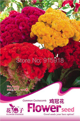 Buy 2 Get 1!(Can accumulate ) 1 Pack 100 Seed Garden Flower Mix Color Cockscomb Celosia Cristata Seeds A064 - Life Store store