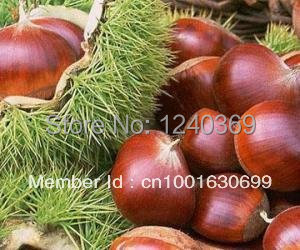 Chestnut seeds, nut seeds (5 seeds), - ALI-Express No.1 store