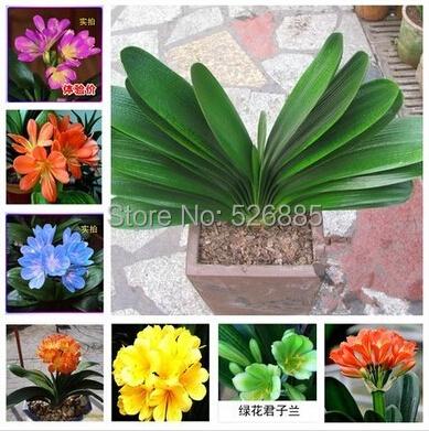 achetez en gros mini plantes en pot en ligne des grossistes mini plantes en pot chinois. Black Bedroom Furniture Sets. Home Design Ideas