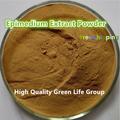 Hot sale  200g  food grade Tongkat Ali  Extract Powder /Pasak bumi/Eurycoma longifolia GMP Factory supply Free shipping