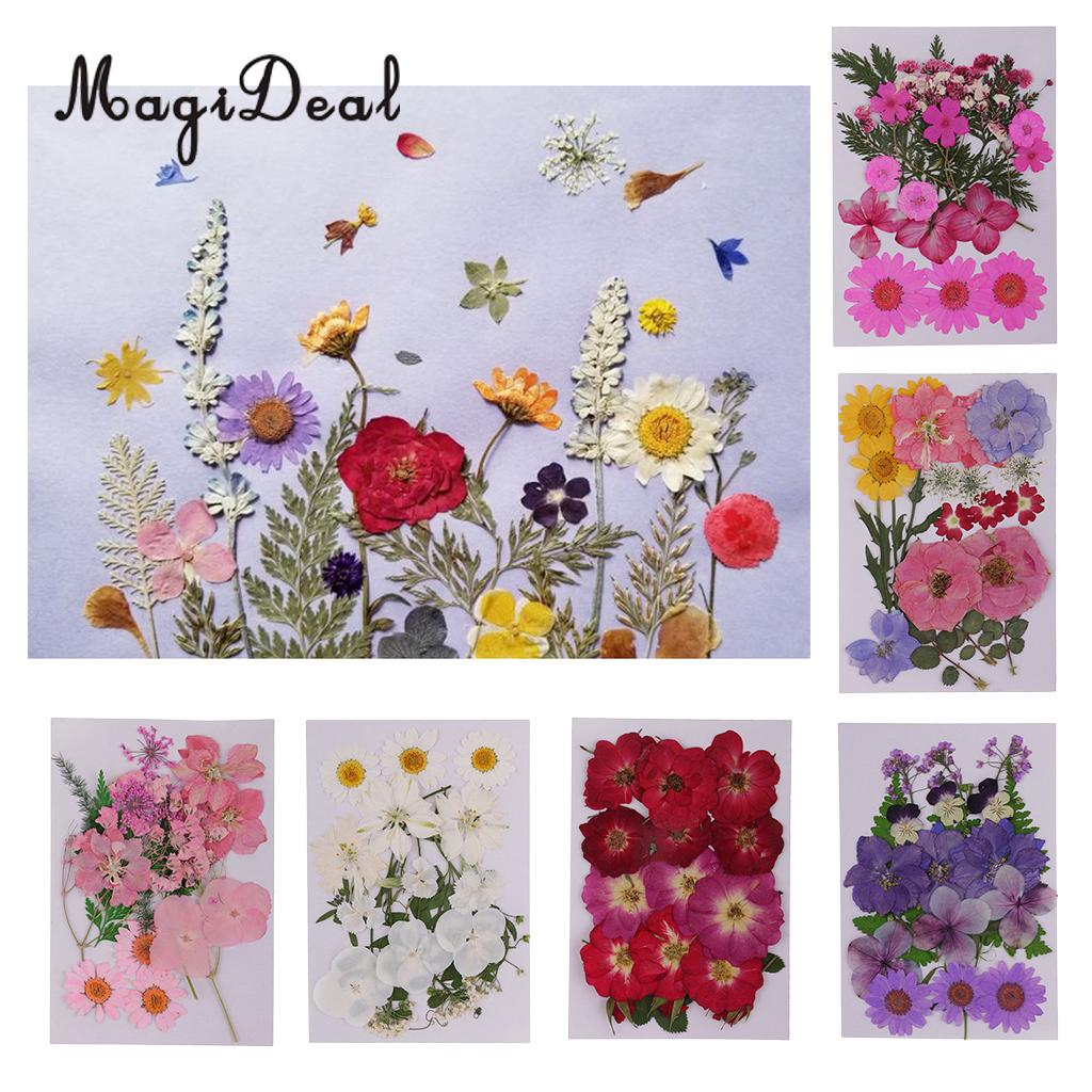 12Pcs Pressed Dried Real Flowers Resin Casting DIY Candle Phone Case Crafts