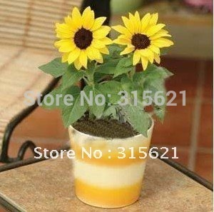 Home gardenning :100pcs/pack   Flower seeds , Sunflower seeds,Potted flower