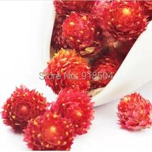 Superior Grade 2015 Newest Flower Tea 50g Fresh Red Plum Flower Tea Chinese Delicious Teas Beauty