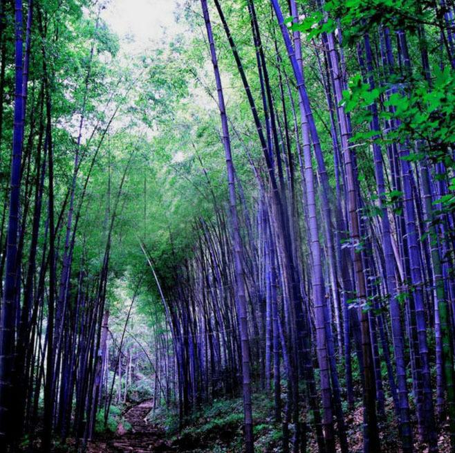 Fiori di bamb promozione fai spesa di articoli in for Semi di bambu