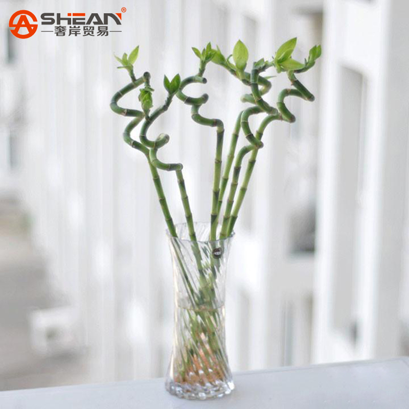 Lucky Bamboo Seeds Small Potted Plants Purify the Air Dracaena Seeds, Planting Is Simple DIY for Home & Garden - 100 PCS(China (Mainland))