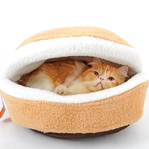 Кошки из Китая