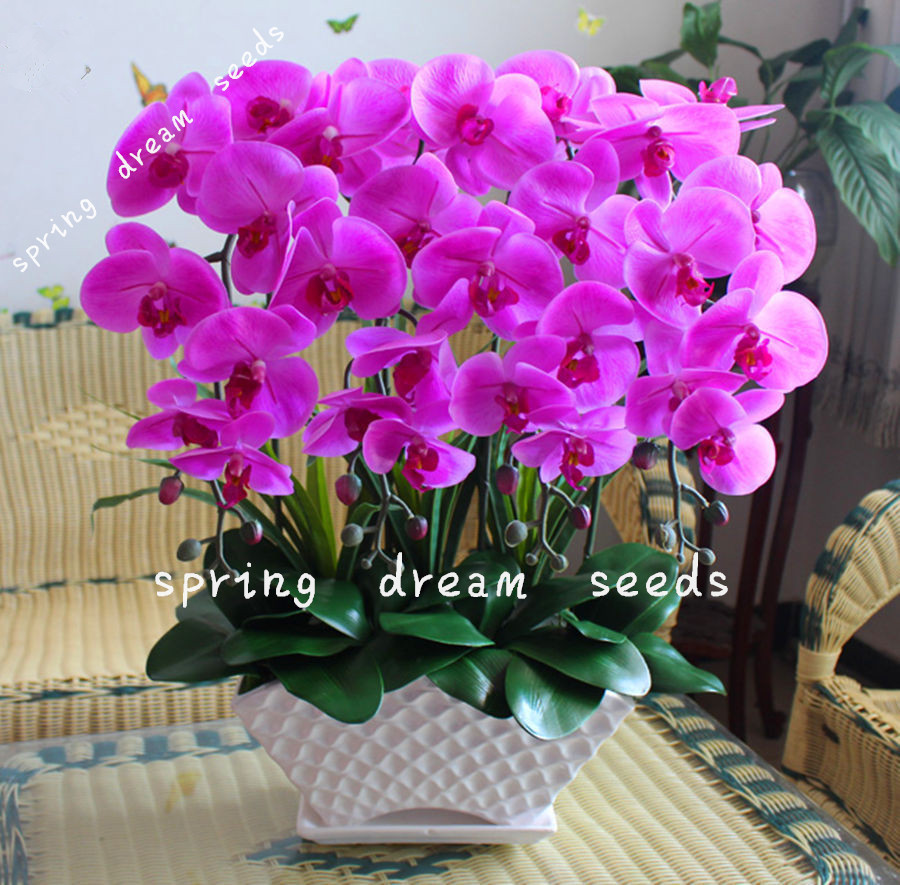 Lowest price 100pcs orchid seed flower seeds for home garden 100pcs orchid seed flower seeds for home garden phalaenopsis orchid seeds buy direct izmirmasajfo
