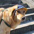 2016 New Summer Baseball Cap For Dogs Breathable Cool Pet Dogs Hat Traveling Hat Sunshade Dogs