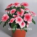 2016 New Arrival Catharanthus roseus flower seeds perennials Bonsai seeds Bloom all the year round 50pcs
