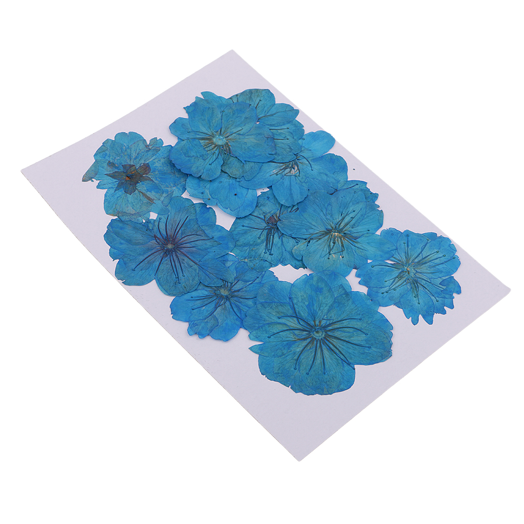 12 Pieces Real Pressed Flower Dried Cherry Blossom Dyed Blue Flowers for Floral Crafts Card Making